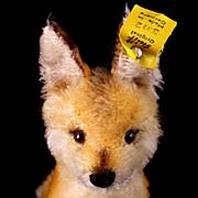Xorry Foxface