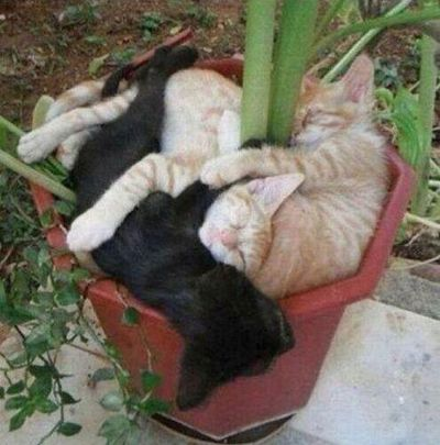 Growing kittens