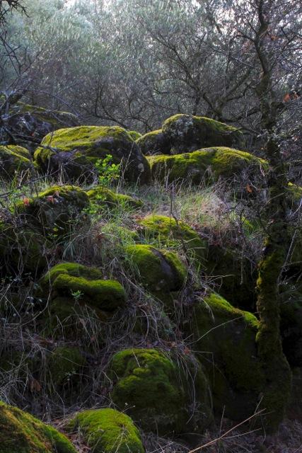 Moss cushioned rocks